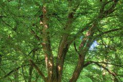 urwald-sababurg-mh-photografie-4