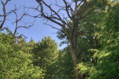 urwald-sababurg-mh-photografie-5