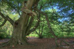 urwald-sababurg-mh-photografie-55