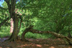 urwald-sababurg-mh-photografie-9